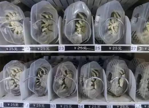 螃蟹自动售货机