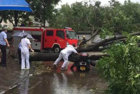 """台风""""天鸽""""肆虐刮倒大树1-2"""