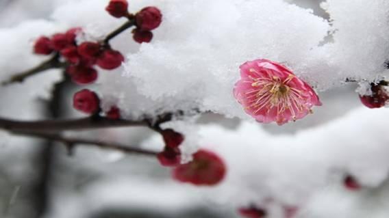 雪水、露水、雨水,曾为泡茶首选