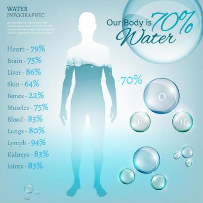 人体的60%~70%是由水分构成的
