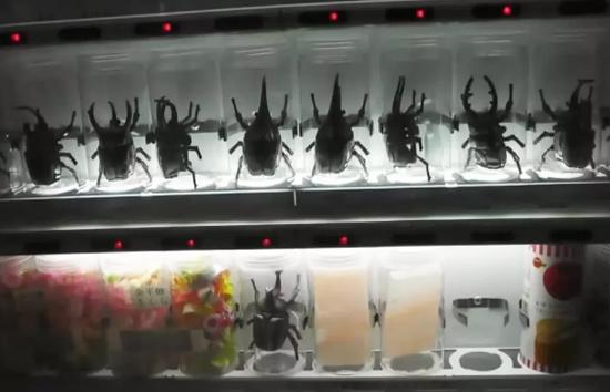 装在自动售货机的甲壳虫