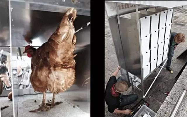 """""""自动鸡蛋售货机"""""""